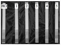 Acids 2 Lab pH Strips